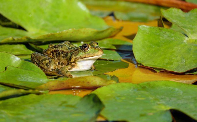 amphibian-animal-beautiful-414224